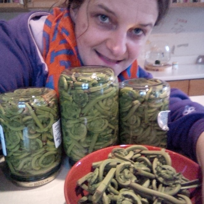 Here are my first pickled fiddleheads jars. // Mes premières conserves de crosses de violon.