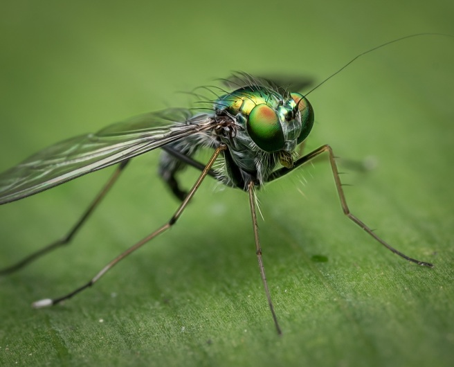 macro-fly-nature-insect-230747